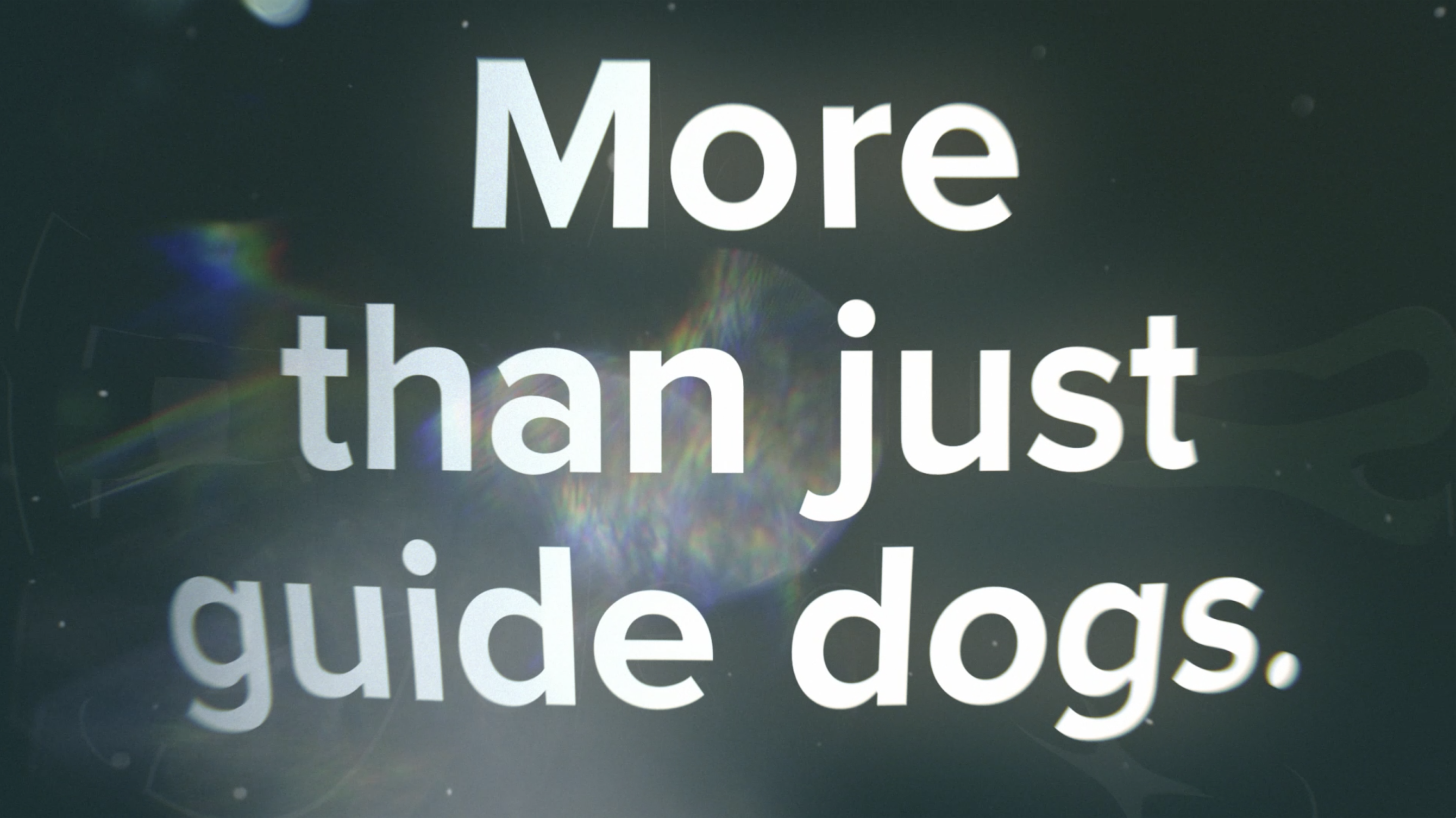 More than just guide dogs